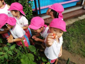 野菜の収穫(福田ち)